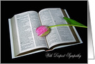 Sympathy pink tulip on open Holy Bible card