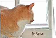 I'm Sorry for with tabby cat looking out of a window card