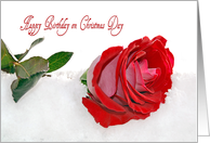 Sister's Birthday on Christmas Day red rose in snow card