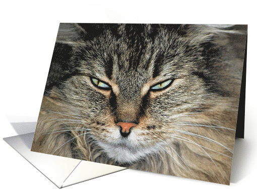 Humorous Birthday for Daughter, close up of a Maine Coon cat face card