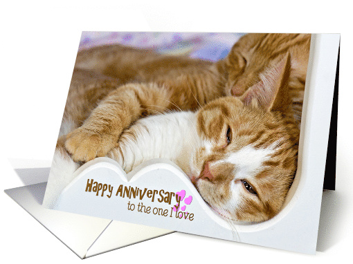 Anniversary for spouse, pair of tabby cats snuggling card (1327464)