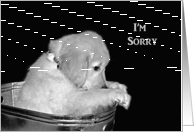 I'm Sorry-Golden Retriever puppy in old wash tub card