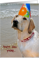 Labrador Retriever With Birthday Party Hat Card