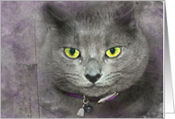 Birthday humor smiling gray cat with textured overlay card
