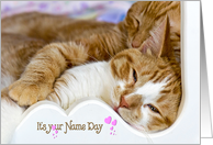 Name Day tabby cats snuggling in white wood frame card