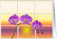 pink orchid with sunrise window card