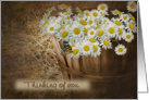 daisy-butterfly-thinking of you card