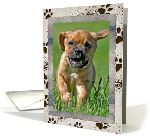 Birthday photo card from the dog card (935014)