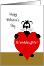 For Granddaughter Valentine's Day Card-Black Cat Holding Red Heart card