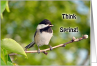 Think Spring - Chicadee card