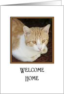 Welcome Home Greeting Card From Pet - Tabby Cat card