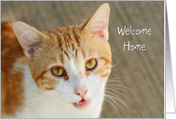 Welcome Home Greeting Card from Cat - Tabby Cat card