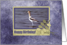 Avocet in Frame with Leaves, Happy Birthday card