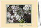 Apple Blossoms, Easter card