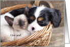 Valentine, Spaniel Puppy and Siamese Kitten in a Basket card