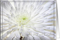 Chrysanthemum, Wish You Early Day Recover, In Chinese card