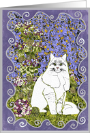 Get Well, White cat in the garden. card