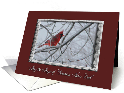 Winter Cardinal, May the Magic of Christmas Never End! card (884917)