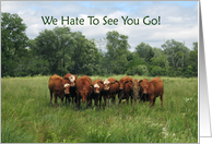 Goodbye from Group with Cows card