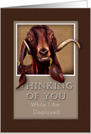 Thinking of You While I Am Deployed, Goat in Window card