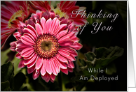 Thinking of You While I Am Deployed - Pink Flower card