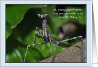 Young grasshopper wise praying mantis Happy Birthday insect bug funny humor card