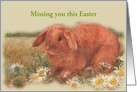 Miss You illustrated Easter Bunny card