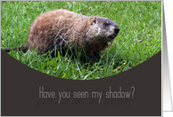 Have you seen my shadow? Happy Ground Hog's Day card
