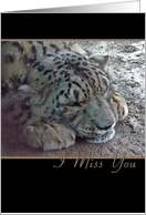 Miss You, Snow Leopard card