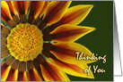Thinking of You Card for a Friend, Gazania Flower Up Close card