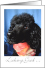Looking Good on Your Birthday, Black Poodle in Scarf card