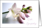 With Sympathy, Hosta Blooms Photograph card