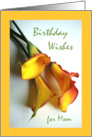 Birthday for Mother, Mango Colored Calla Lily Flowers card