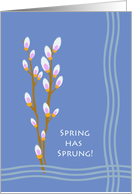 Spring Has Sprung, Pussy Willow Illustration card