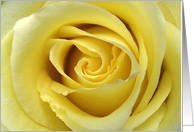 Friendship, Up Close Photograph of a Yellow Rose card