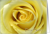 Thank You Card for Sister, Yellow Rose Up Close card