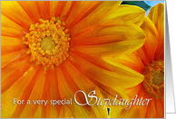 Congratulations on Wedding for Stepdaughter, Yellow Orange Gazania card