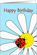 Happy Birthday, Ladybug Insect on White Daisy Flower card