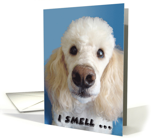 Funny Birthday, Poodle With Big Nose card (413658)