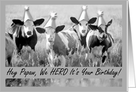 Birthday for Papaw, Party Animals, Cows with Hats card