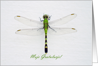 Green Dragonfly, Congratulations in Polish, Moje Gratulacje card