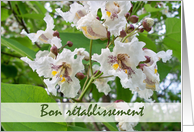Bon retablissement, French Get Well, Catalpa Blooms card
