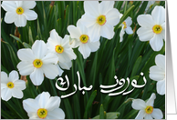 Persian New Year, Happy Norooz in Farsi, Narcissus Flowers card