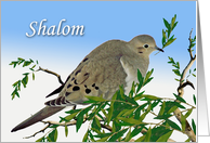 Shalom for Pesach, Mourning Dove with Olive Branch card