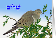 Shalom in Hebrew for Pesach, Mourning Dove with Olive Branch card