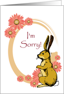 occasions, i'm sorry, rabbit card