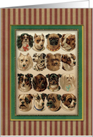 Dogs,Dogs,Dogs card