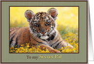 To my Secret Pal Young Tiger Field of Yellow Flowers card