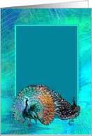Blue Green Peacock Wedding Guest Invitation card