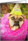 Never Too Old To Party, dog in party hat card